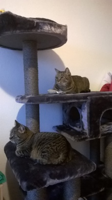 cats_picture_3