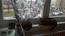 cats_picture_4